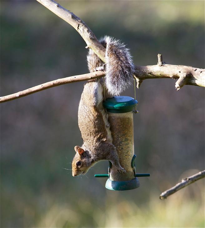 Squirrel Proof Your Bird Feeders Blain S Farm Amp Fleet Blog