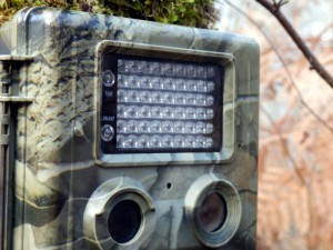 how to pick the best game camera for your hunt | blain's