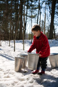 Supplies For Maple Sugaring