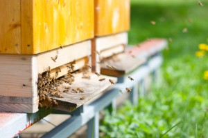 Who's Who: Meet Your Bee Colony