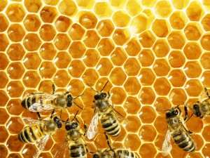 What's the Buzz? Why Try Beekeeping?