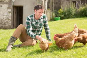 A man and his hens outdoors. Having a healthy environment boosts egg production.