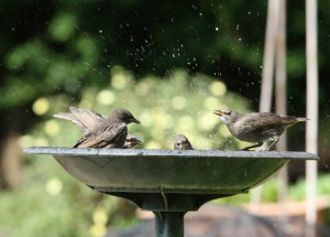 Choosing a Bird Bath