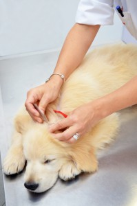 Flea & Tick Prevention For Your Pets
