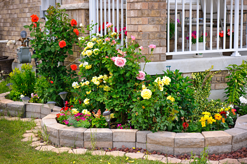 9 low maintenance plants flowers blain 39 s farm fleet blog for Low maintenance flowers outdoor