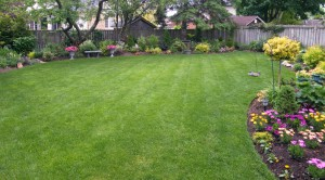Grass Seed for Colder Climates