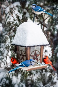 Attract birds to a bird feeder even in the snow.