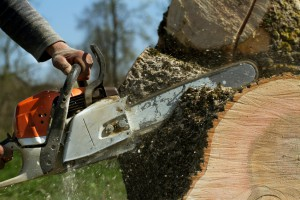 What to Know Before Buying a Chainsaw
