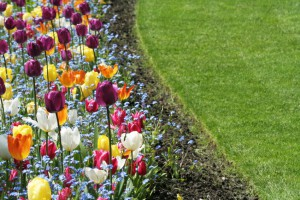 Learn about the USDA Hardiness Zones and have a beautiful garden