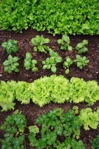 Crop Rotation Tips For Hobby Farm Beginners
