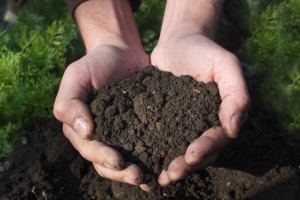 Hands Holding Soil ready to be tested for soil pH
