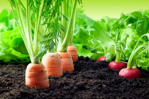 Vegetable Gardening Zones