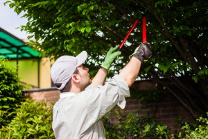 Pruning Trees & Shrubs