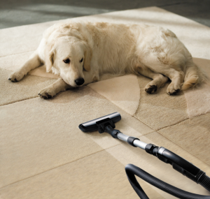 A dog lays on the carpet, staring down a pet hair vacuum.