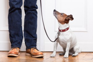owner and dog training