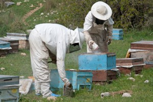 Bee Predators in Beekeeping
