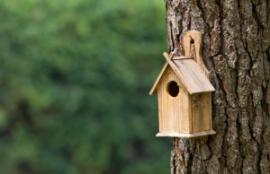 Bird Houses For Your Backyard