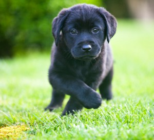 New Puppy Preparation Tips