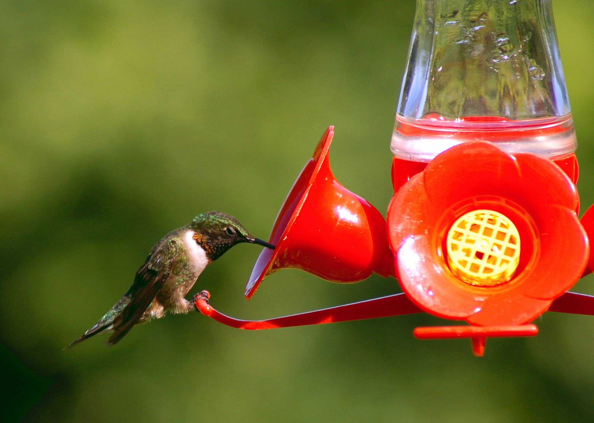 free bee humingbird zoom proof il feeder fullxfull drip i copper listing hummingbird