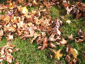 Lawn Vacuum will remove dead leaves from lawn