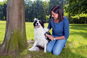Pet Grooming Tips for Summer