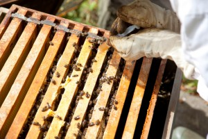 Bee Diseases and Pests