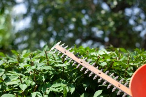 Hedge Trimmer Trimming Privacy Hedges
