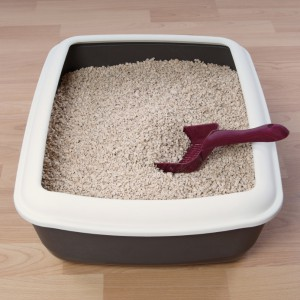 Cat Litter Buying Guide