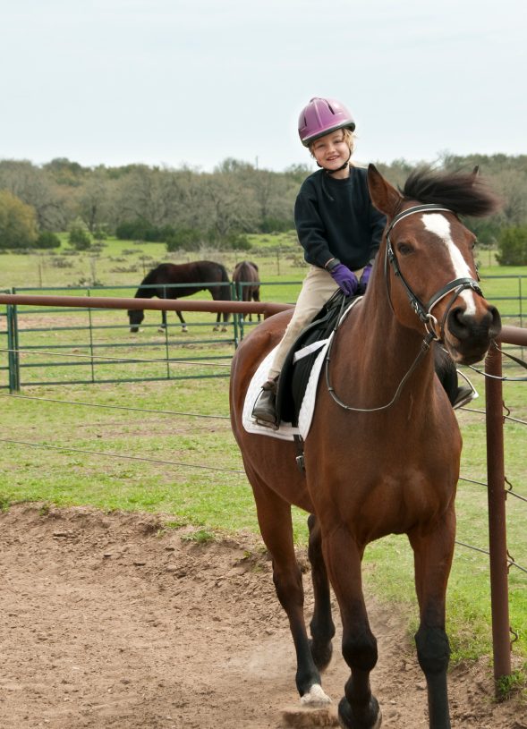 horseback riding helmets