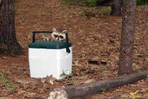 Protecting Your Campsite From Animals