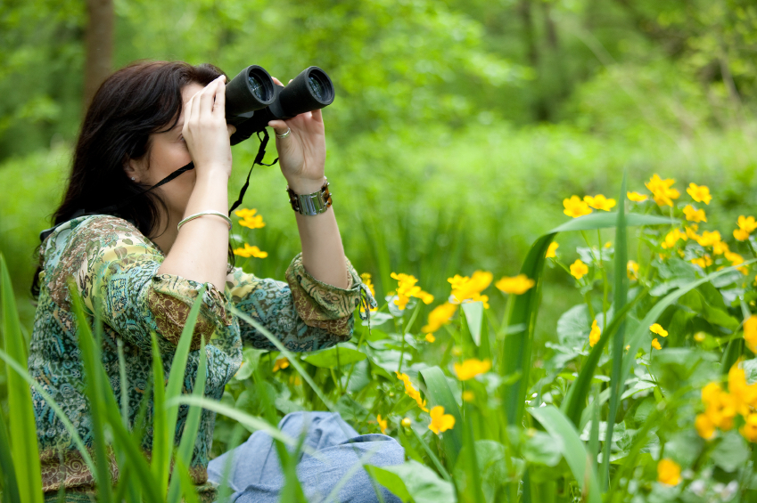 how to get into bird watching