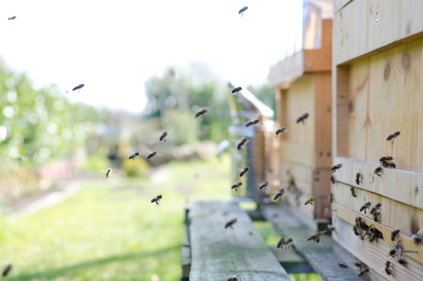 Can I Have Bees in My Backyard? | Blain's Farm & Fleet Blog