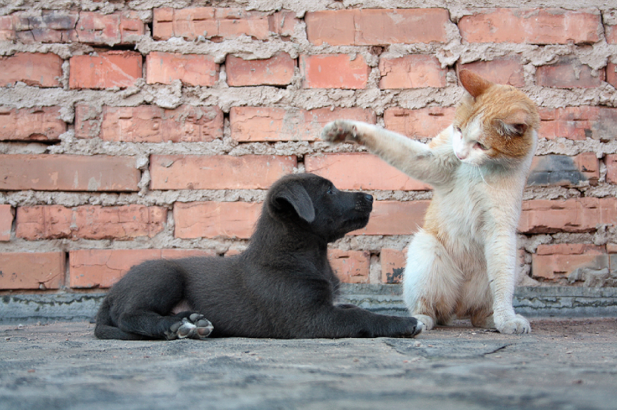 Introduce New Cat To Resident Dog