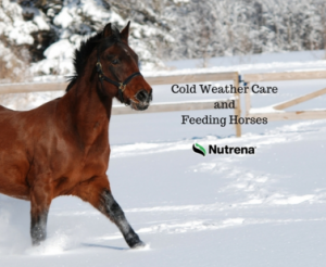 Cold Weather Care and Feeding of Horses