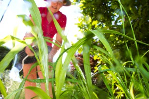 10 Ways to Kill Garden Weeds