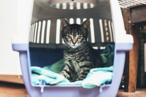 5 Tips for Traveling With Cats
