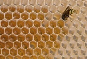 How to Combat Beehive Robbing