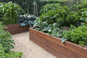Tips for Bulding Raised Garden Beds