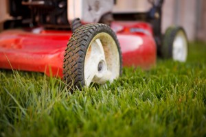 When is the Best Time for Lawn Mowing