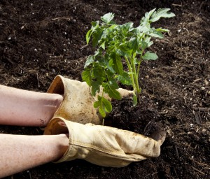 10 Ways to Improve Garden Soil