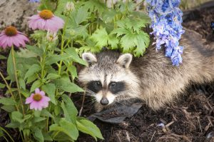 How to Keep Out Garden Pests