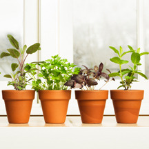 How to Repot Plants and Flowers