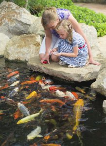 Pond Fish for Your Backyard Pond