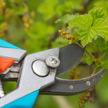 picking the perfect pruners