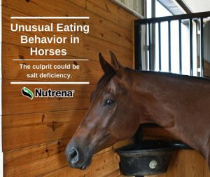 Unusual Easting Behavior in Horses