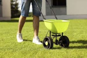 10 Reasons to Lay Grass Seed
