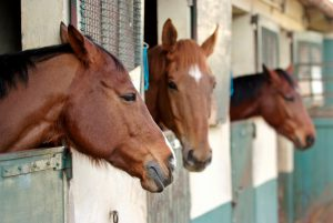 Keeping Your Horse Stable Clean