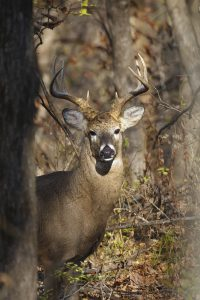 How to Use Hunting Scent Eliminator