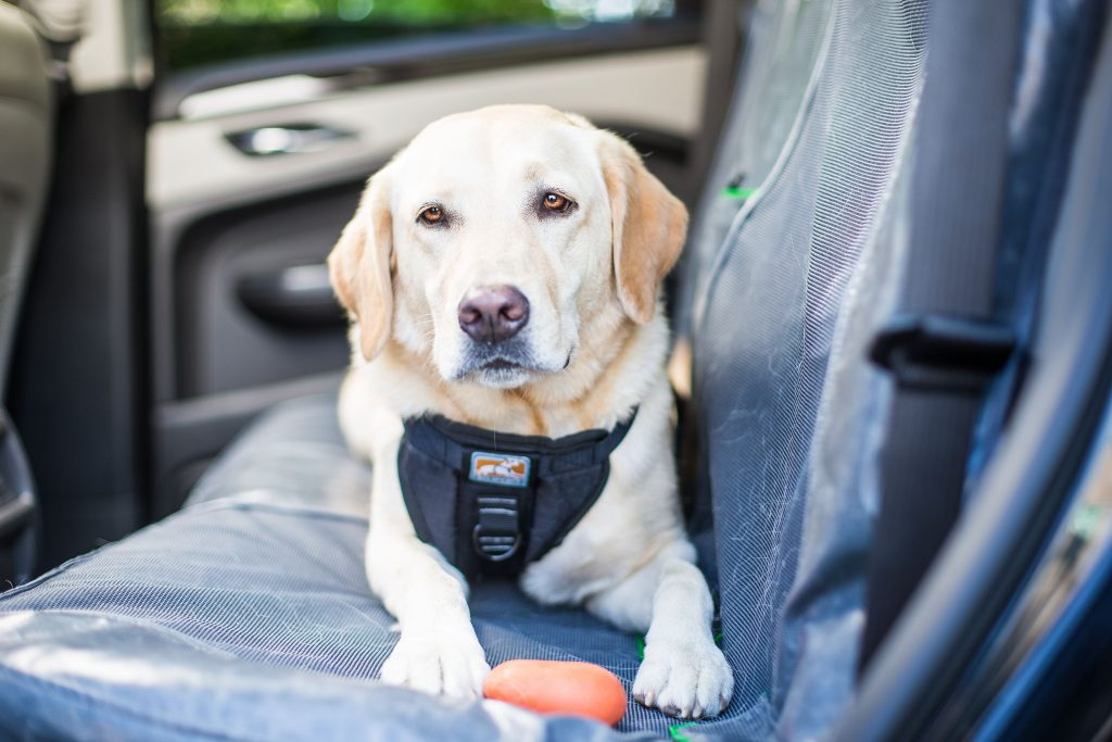 how-to-keep-your-dog-entertained-in-the-car