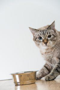 Choosing the Best Cat Treats